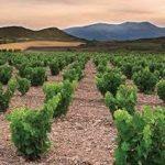 Alto Moncayo vineyards