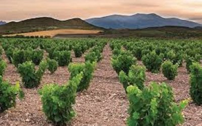 Upcoming Spanish Wine Tastings, Chicken in Sidra, Viaduct Party