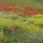 Spanish spring wildflowers